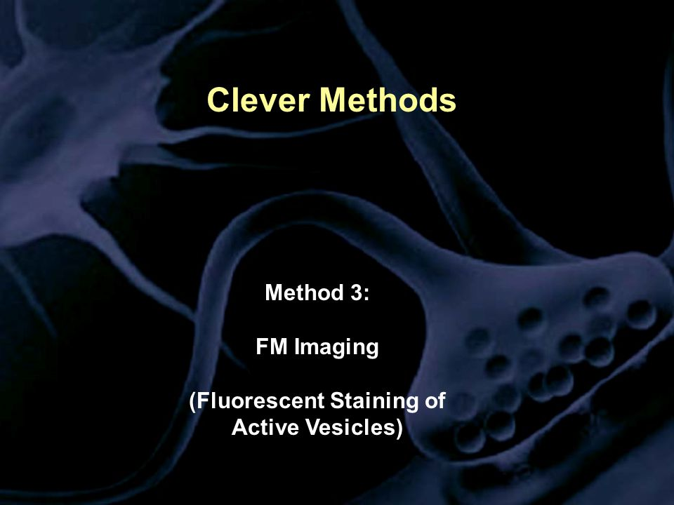 Clever Methods Method 3: FM Imaging (Fluorescent Staining of Active Vesicles)