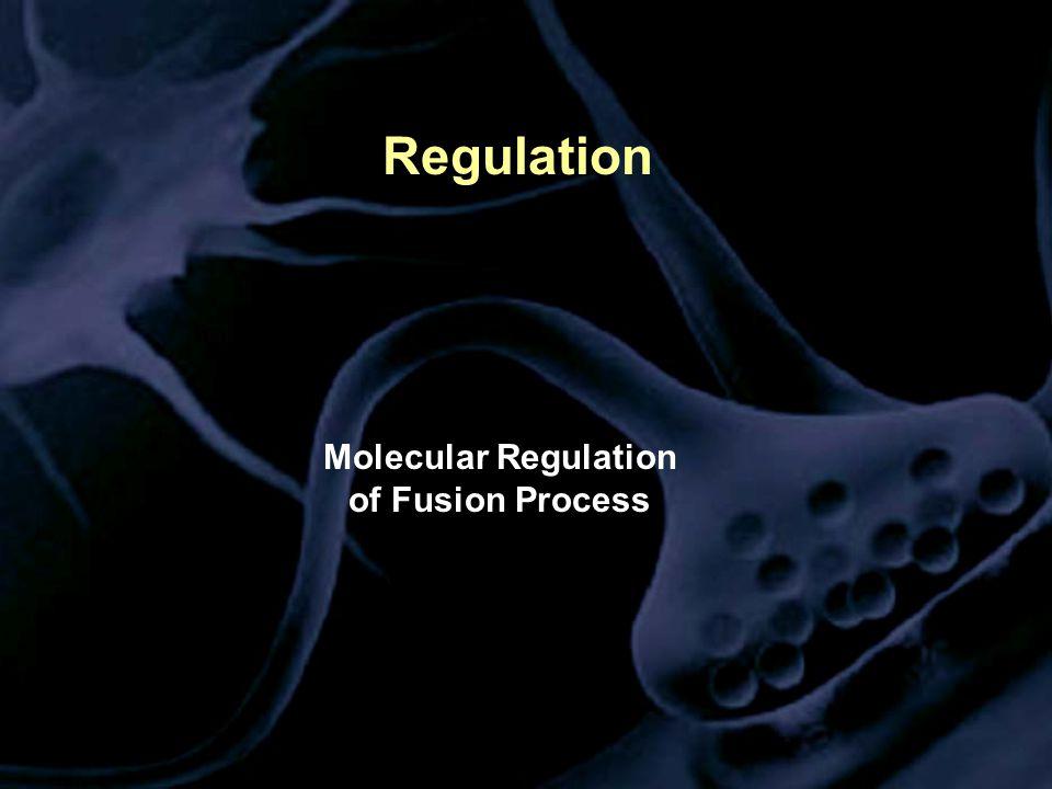 Regulation Molecular Regulation of Fusion Process