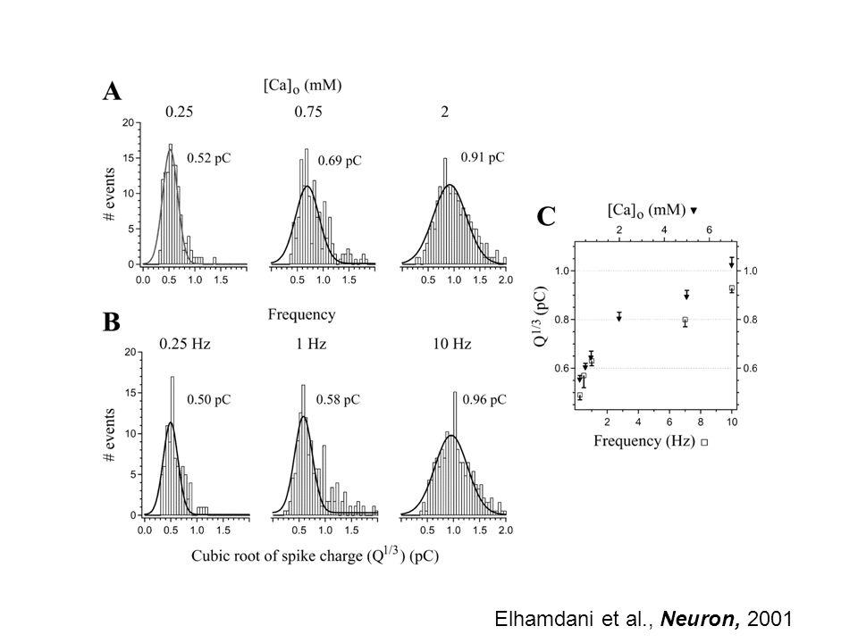 Elhamdani et al., Neuron, 2001