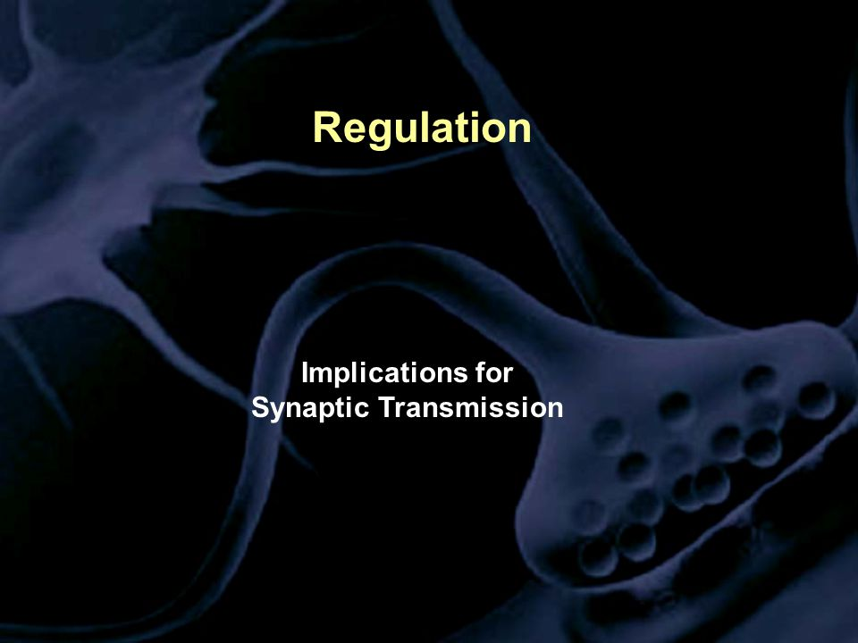 Regulation Implications for Synaptic Transmission