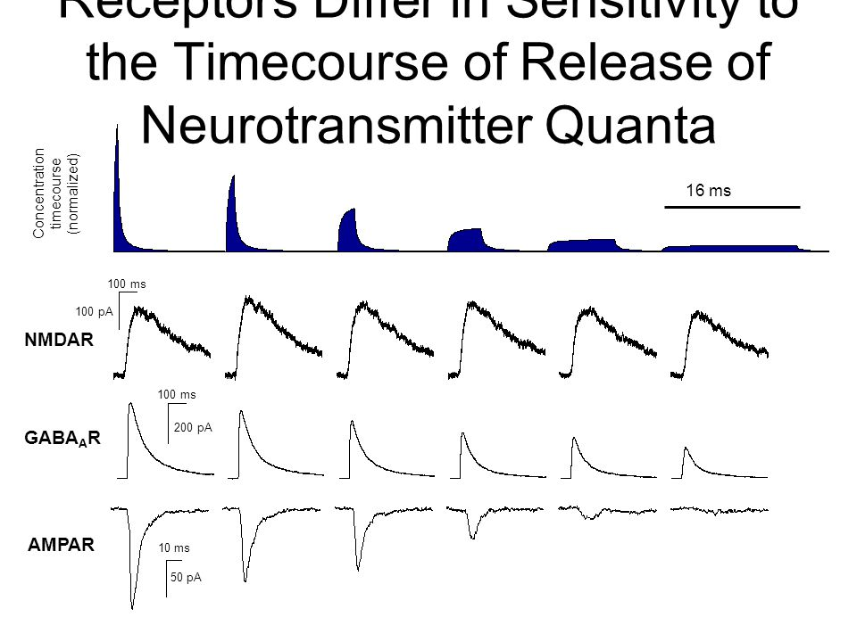 NMDAR GABA A R AMPAR Concentration timecourse (normalized) 100 ms 100 pA 100 ms 200 pA 10 ms 50 pA 16 ms Receptors Differ in Sensitivity to the Timecourse of Release of Neurotransmitter Quanta