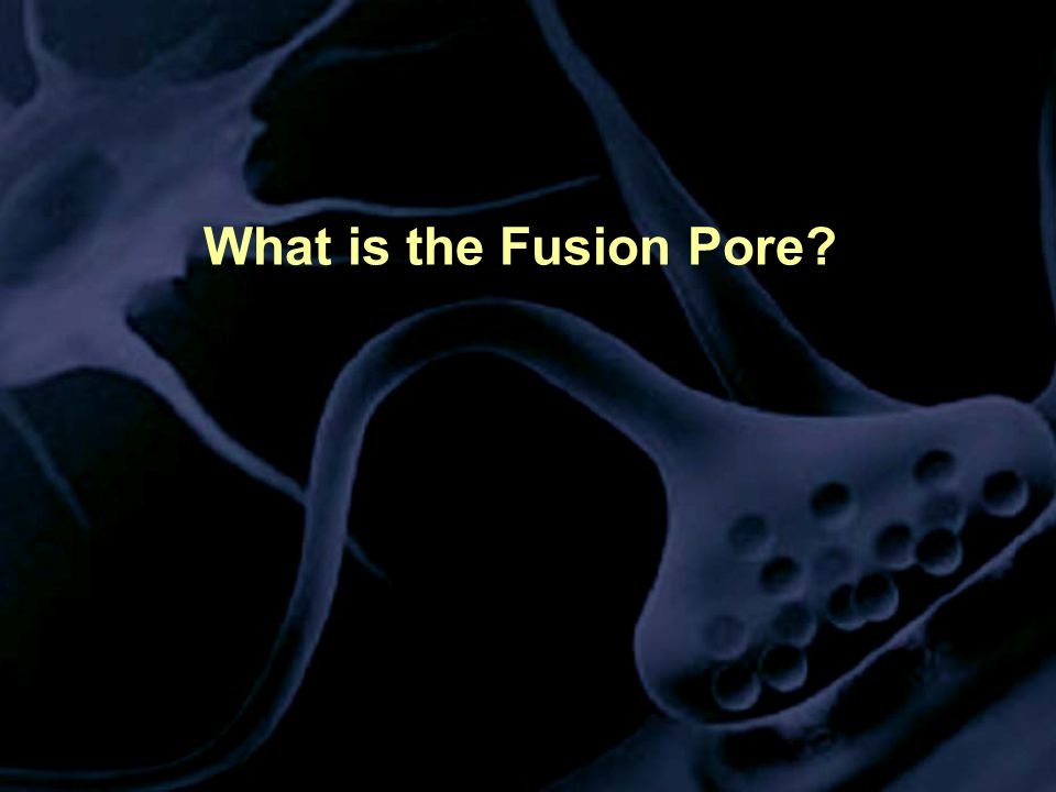 What is the Fusion Pore