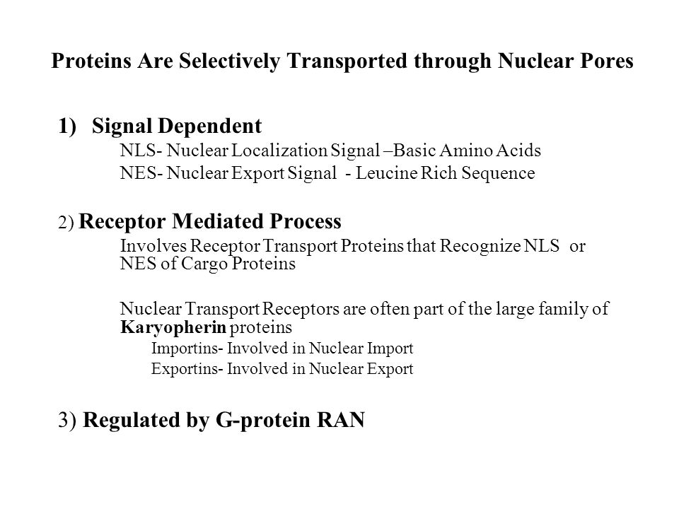 Proteins Are Selectively Transported through Nuclear Pores 1)Signal Dependent NLS- Nuclear Localization Signal –Basic Amino Acids NES- Nuclear Export Signal - Leucine Rich Sequence 2) Receptor Mediated Process Involves Receptor Transport Proteins that Recognize NLS or NES of Cargo Proteins Nuclear Transport Receptors are often part of the large family of Karyopherin proteins Importins- Involved in Nuclear Import Exportins- Involved in Nuclear Export 3) Regulated by G-protein RAN