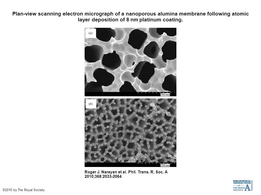 Plan-view scanning electron micrograph of a nanoporous alumina membrane following atomic layer deposition of 8 nm platinum coating.