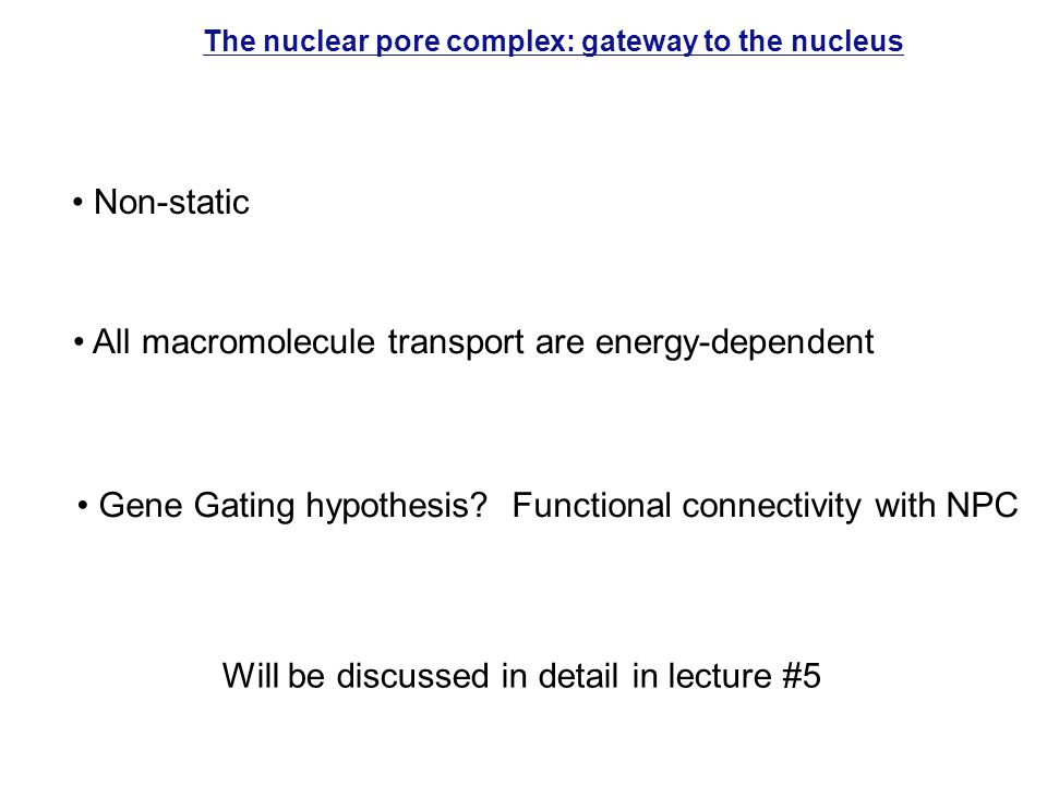 The nuclear pore complex: gateway to the nucleus All macromolecule transport are energy-dependent Non-static Will be discussed in detail in lecture #5 Gene Gating hypothesis.