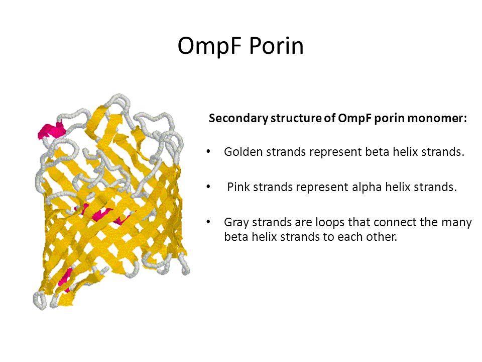 OmpF Porin Secondary structure of OmpF porin monomer: Golden strands represent beta helix strands.