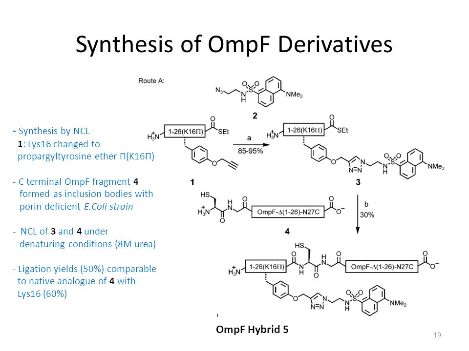 Synthesis of OmpF Derivatives OmpF Hybrid 5 19 - Synthesis by NCL 1: Lys16 changed to propargyltyrosine ether П(K16П) - C terminal OmpF fragment 4 formed as inclusion bodies with porin deficient E.Coli strain - NCL of 3 and 4 under denaturing conditions (8M urea) - Ligation yields (50%) comparable to native analogue of 4 with Lys16 (60%)