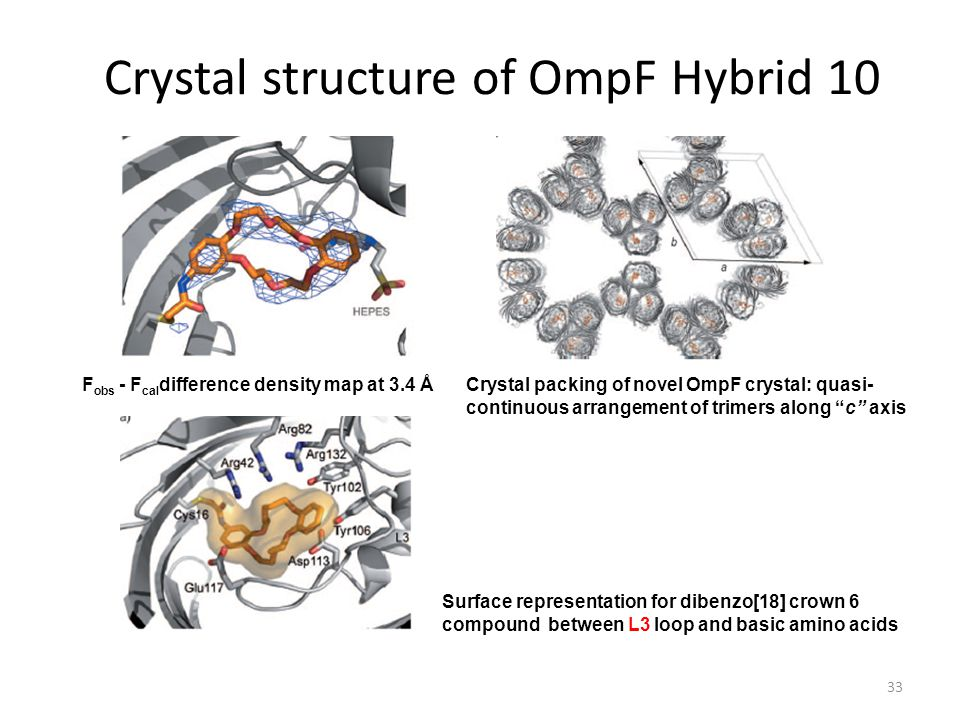 Crystal structure of OmpF Hybrid 10 33 F obs - F cal difference density map at 3.4 ÅCrystal packing of novel OmpF crystal: quasi- continuous arrangement of trimers along c axis Surface representation for dibenzo[18] crown 6 compound between L3 loop and basic amino acids
