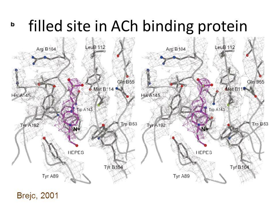 filled site in ACh binding protein Brejc, 2001