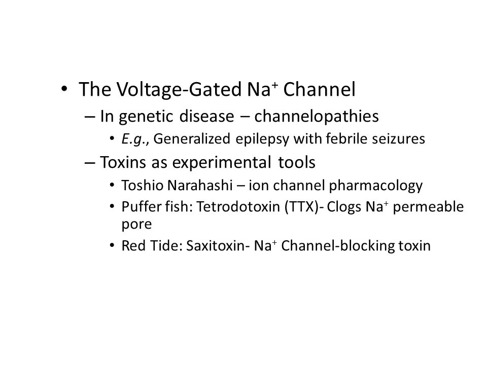 The Voltage-Gated Na + Channel – In genetic disease – channelopathies E.g., Generalized epilepsy with febrile seizures – Toxins as experimental tools Toshio Narahashi – ion channel pharmacology Puffer fish: Tetrodotoxin (TTX)- Clogs Na + permeable pore Red Tide: Saxitoxin- Na + Channel-blocking toxin