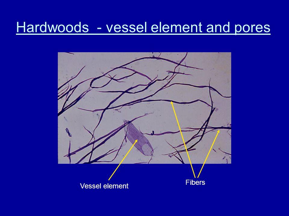 Pore distribution – ring porous Earlywood Latewood