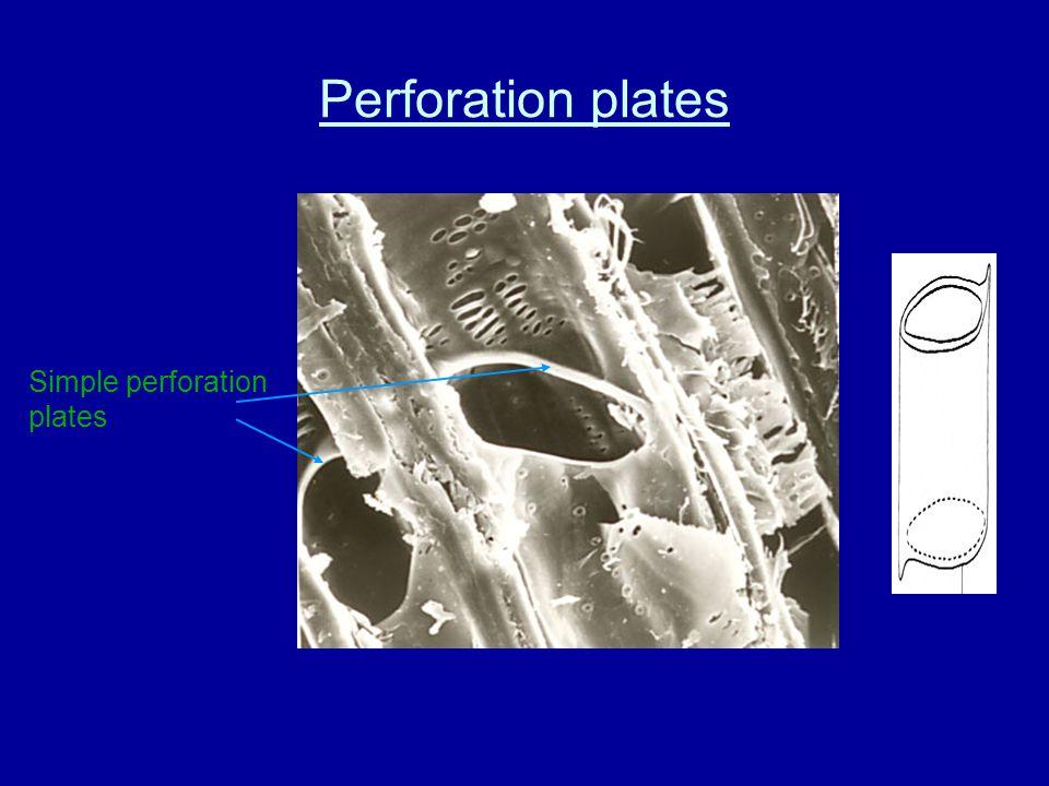 Perforation plates Scalariform perforation plate