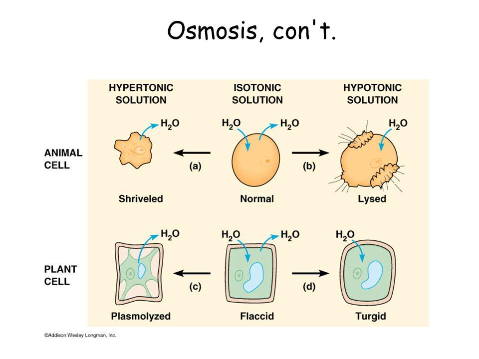 Osmosis, con t.