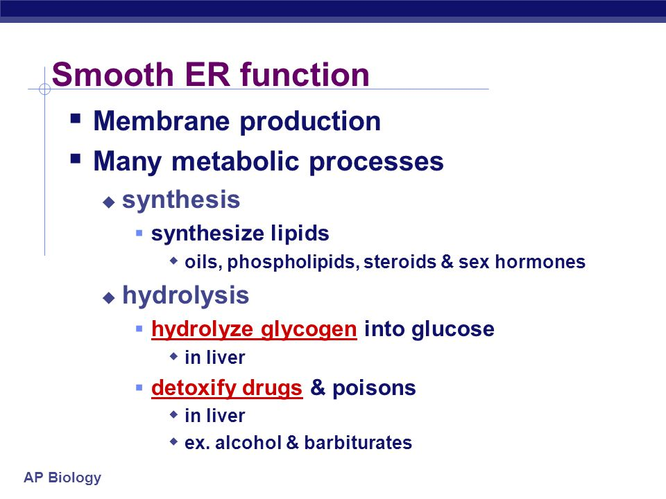 AP Biology Types of ER roughsmooth