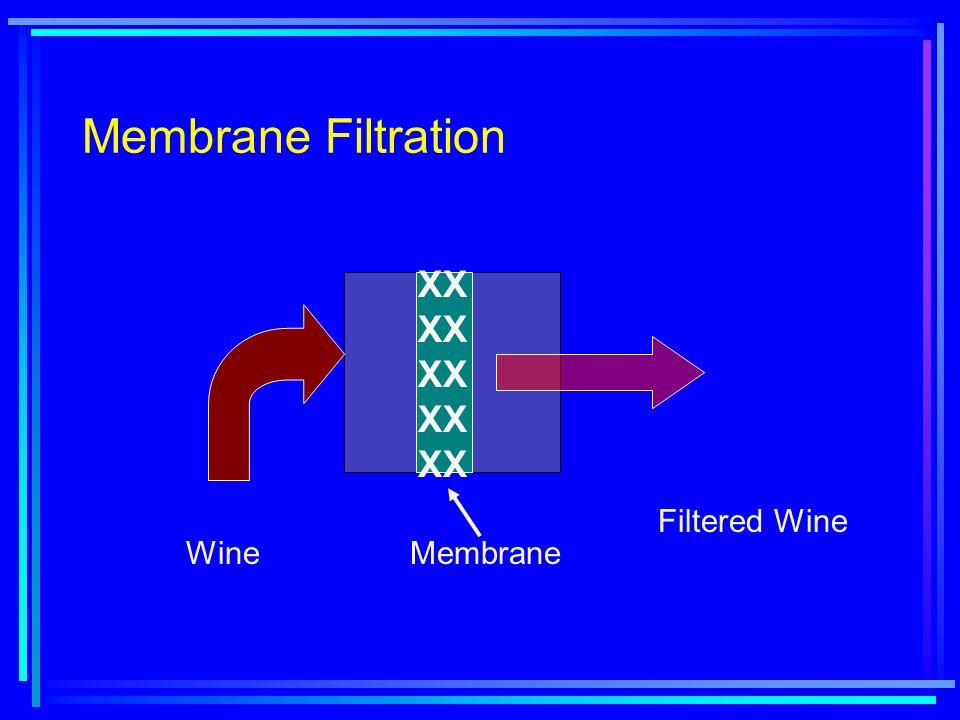 Membrane Filtration WineMembrane Filtered Wine XX XX XX XX XX
