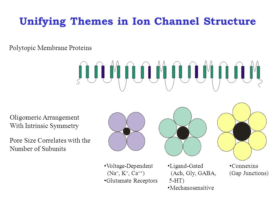 Unifying Themes in Ion Channel Structure Polytopic Membrane Proteins Oligomeric Arrangement With Intrinsic Symmetry Pore Size Correlates with the Number of Subunits Voltage-Dependent (Na +, K +, Ca ++ ) Glutamate Receptors Ligand-Gated (Ach, Gly, GABA, 5-HT) Mechanosensitive Connexins (Gap Junctions)