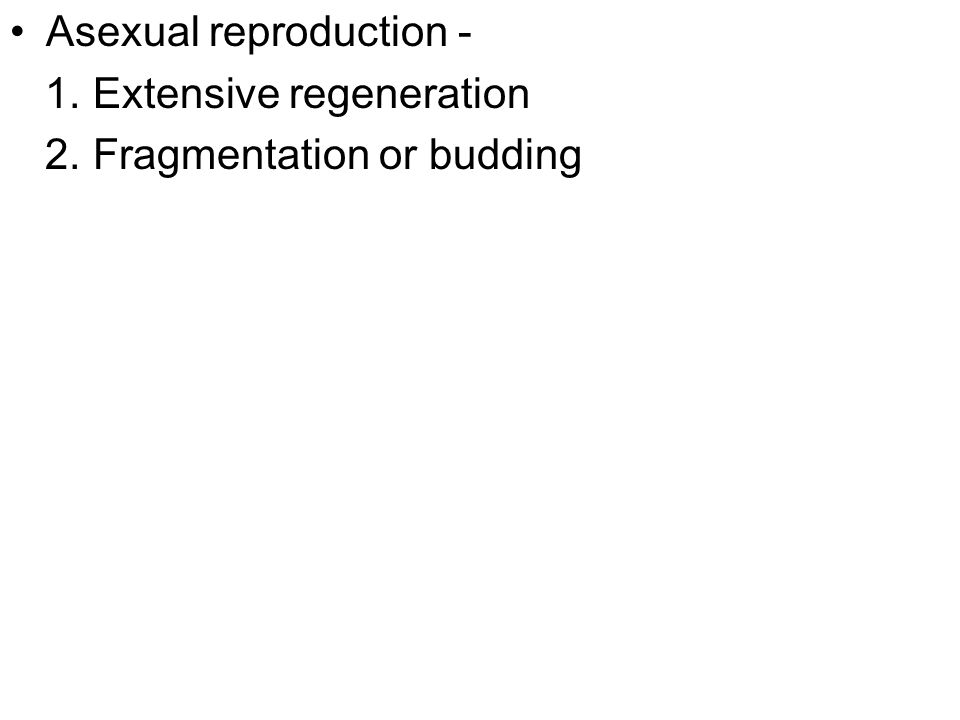 Asexual reproduction - 1. Extensive regeneration 2. Fragmentation or budding