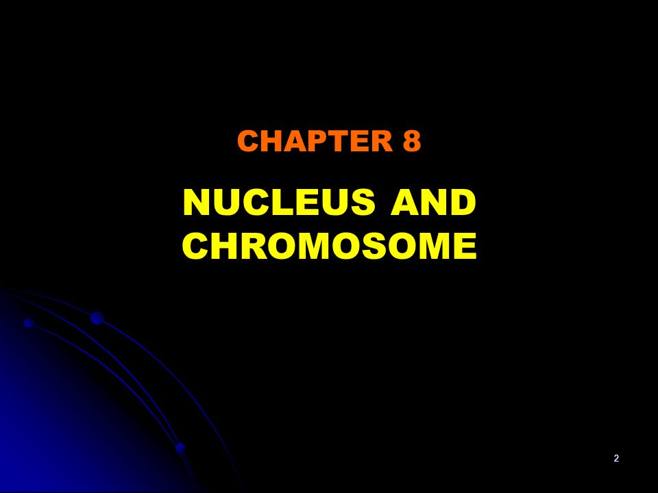 53 Structure of nucleolus