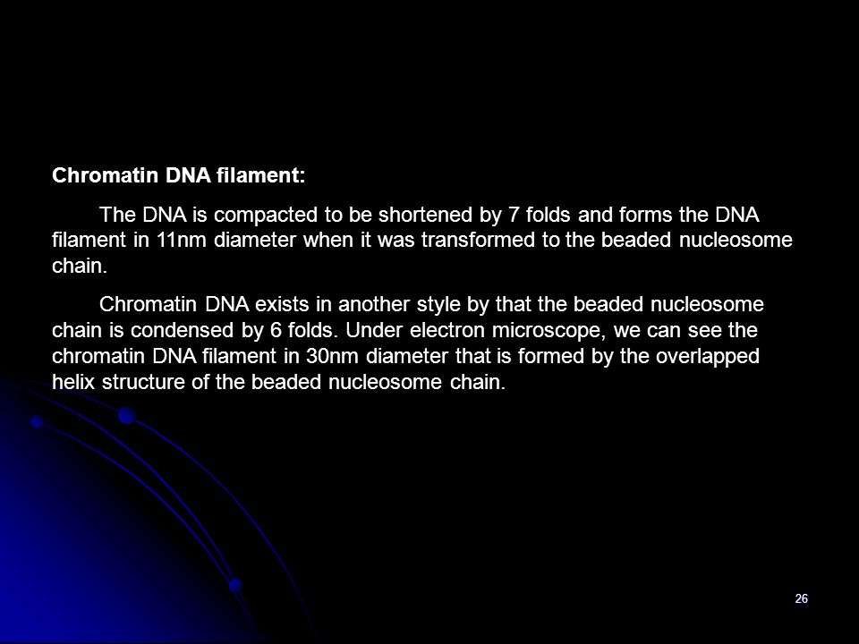 26 Chromatin DNA filament: The DNA is compacted to be shortened by 7 folds and forms the DNA filament in 11nm diameter when it was transformed to the