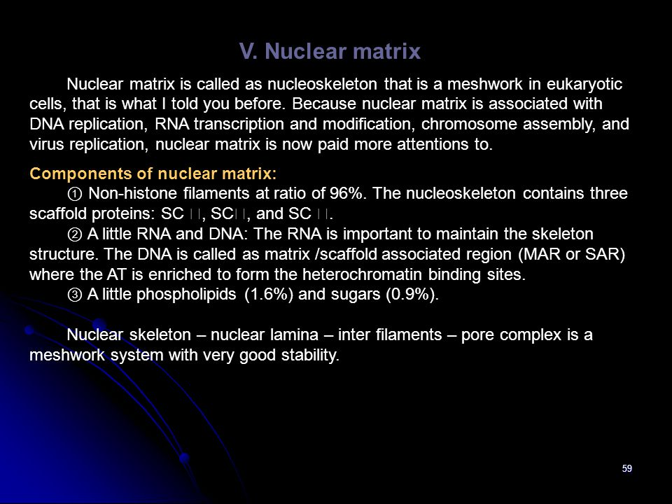 59 V. Nuclear matrix Nuclear matrix is called as nucleoskeleton that is a meshwork in eukaryotic cells, that is what I told you before. Because nuclea