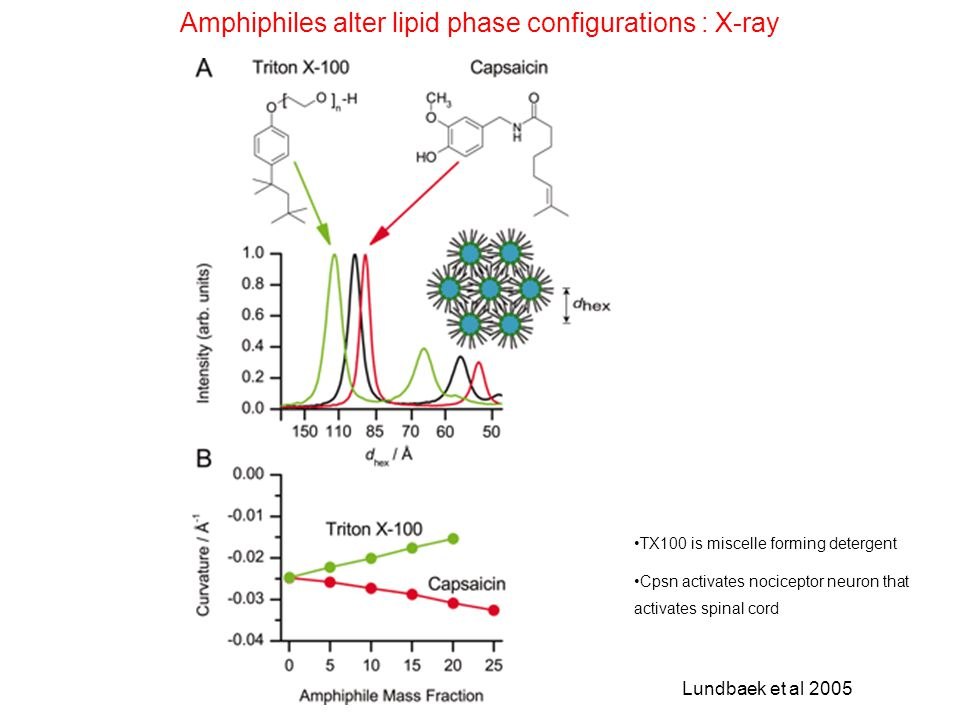 Amphiphiles alter lipid phase configurations : X-ray TX100 is miscelle forming detergent Cpsn activates nociceptor neuron that activates spinal cord L