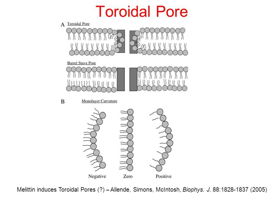 Toroidal Pore Melittin induces Toroidal Pores (?) – Allende, Simons, McIntosh, Biophys.