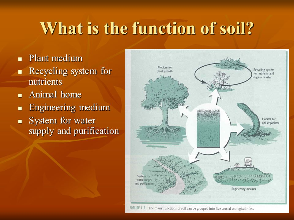 What is the function of soil.