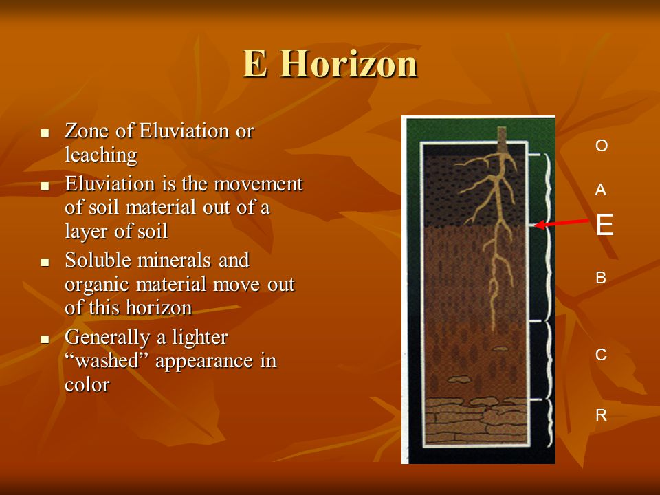E Horizon Zone of Eluviation or leaching Zone of Eluviation or leaching Eluviation is the movement of soil material out of a layer of soil Eluviation is the movement of soil material out of a layer of soil Soluble minerals and organic material move out of this horizon Soluble minerals and organic material move out of this horizon Generally a lighter washed appearance in color Generally a lighter washed appearance in color A E B C R O