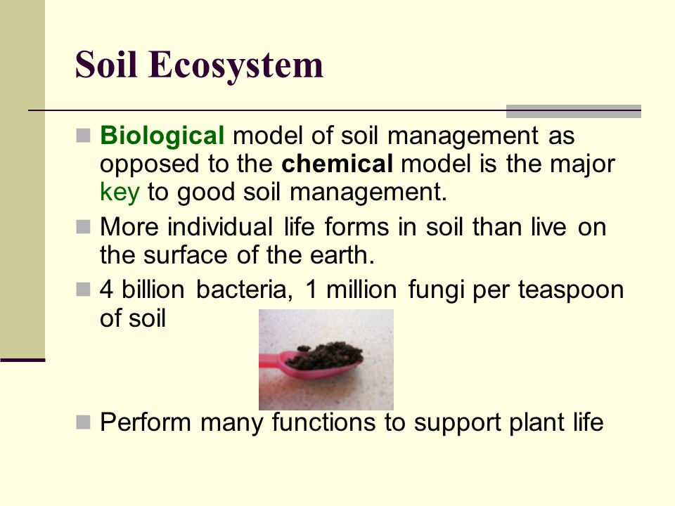 Soil Ecosystem Biological model of soil management as opposed to the chemical model is the major key to good soil management.