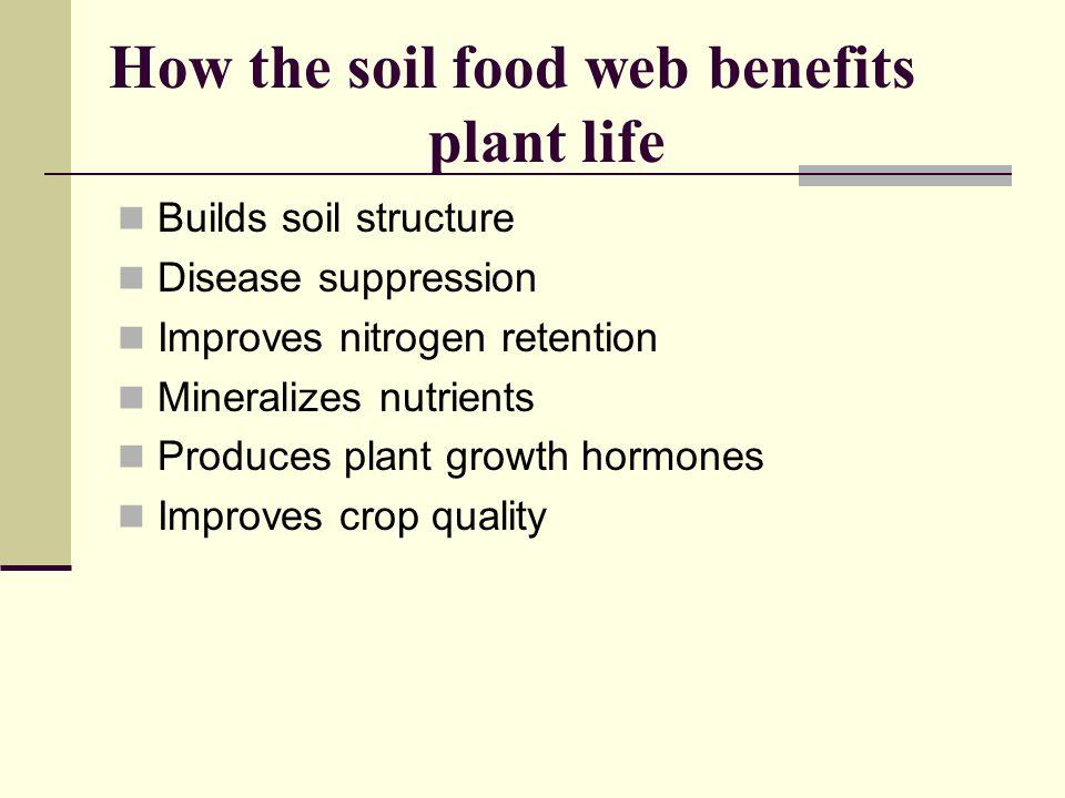 How the soil food web benefits plant life Builds soil structure Disease suppression Improves nitrogen retention Mineralizes nutrients Produces plant growth hormones Improves crop quality