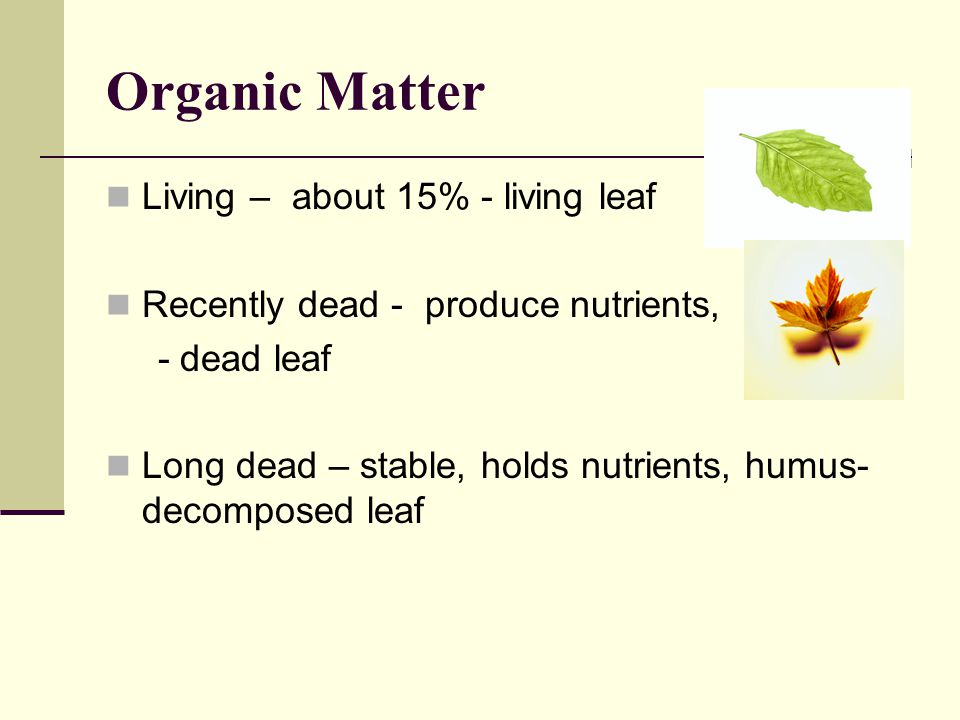 Organic Matter Living – about 15% - living leaf Recently dead - produce nutrients, - dead leaf Long dead – stable, holds nutrients, humus- decomposed leaf