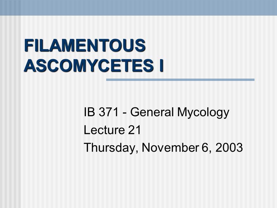 FILAMENTOUS ASCOMYCETES I IB 371 - General Mycology Lecture 21 Thursday, November 6, 2003