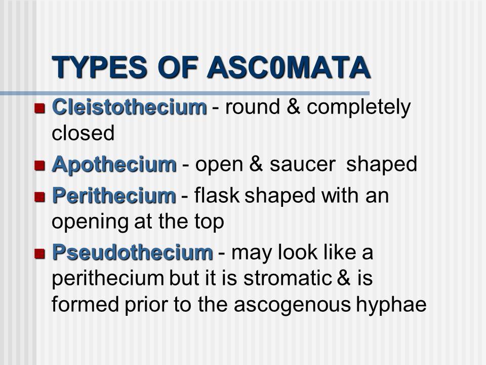TYPES OF ASC0MATA Cleistothecium Cleistothecium - round & completely closed Apothecium Apothecium - open & saucer shaped Perithecium Perithecium - fla