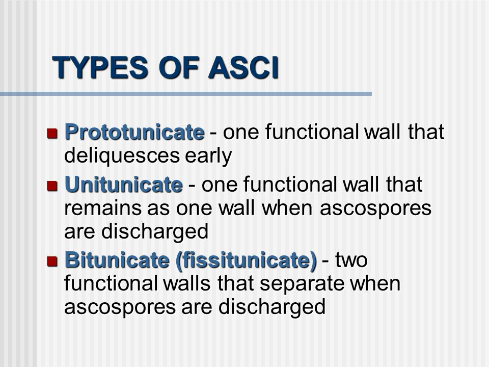 TYPES OF ASCI Prototunicate - one functional wall that deliquesces early Prototunicate - one functional wall that deliquesces early Unitunicate- one f