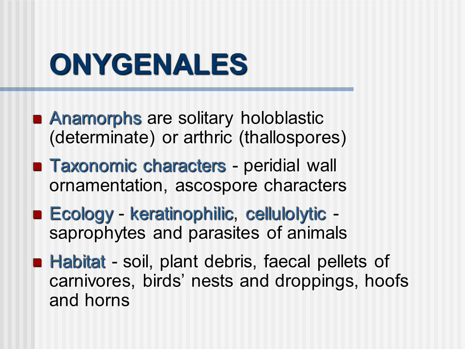 ONYGENALES Anamorphs are solitary holoblastic (determinate) or arthric (thallospores) Anamorphs are solitary holoblastic (determinate) or arthric (tha