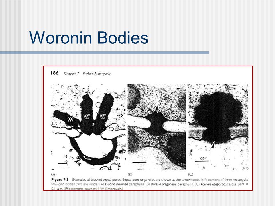 Woronin Bodies