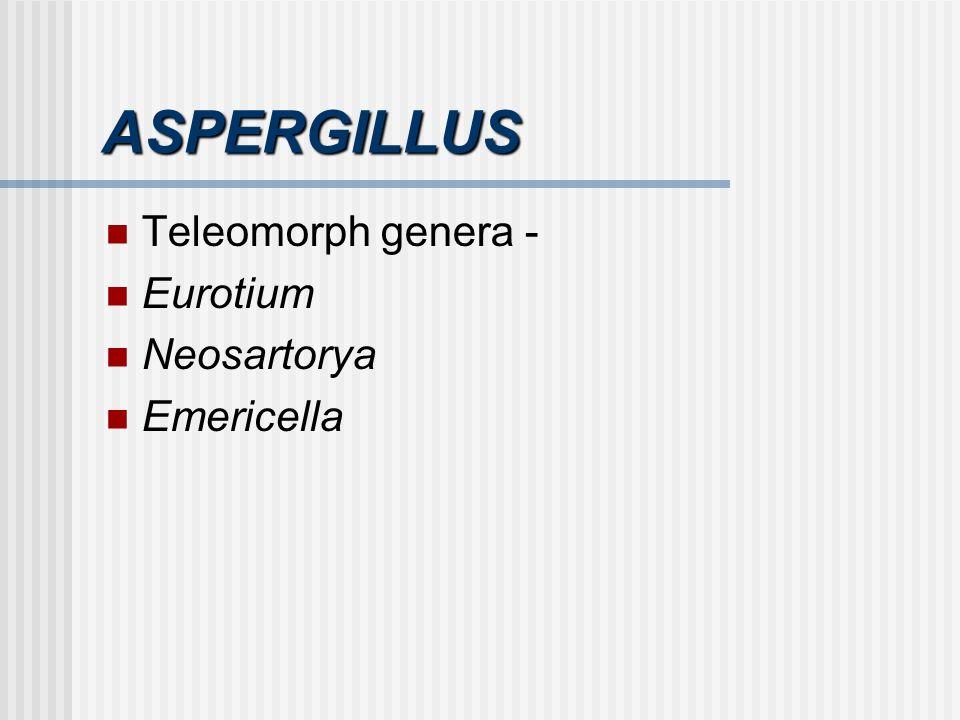 ASPERGILLUS Teleomorph genera - Eurotium Neosartorya Emericella
