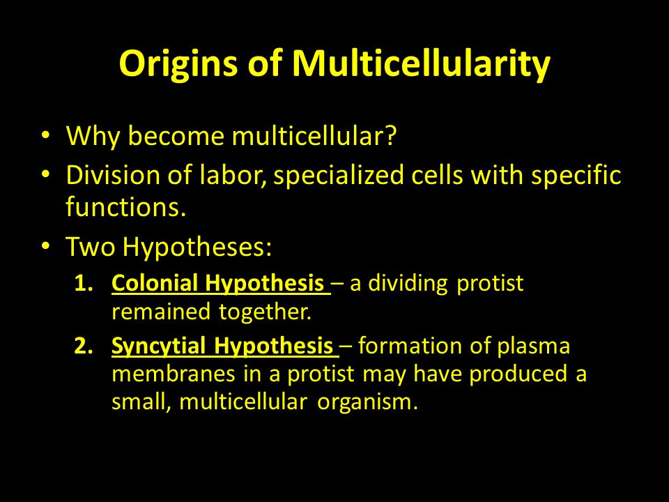 Origins of Multicellularity Why become multicellular? Division of labor, specialized cells with specific functions. Two Hypotheses: 1.Colonial Hypothe