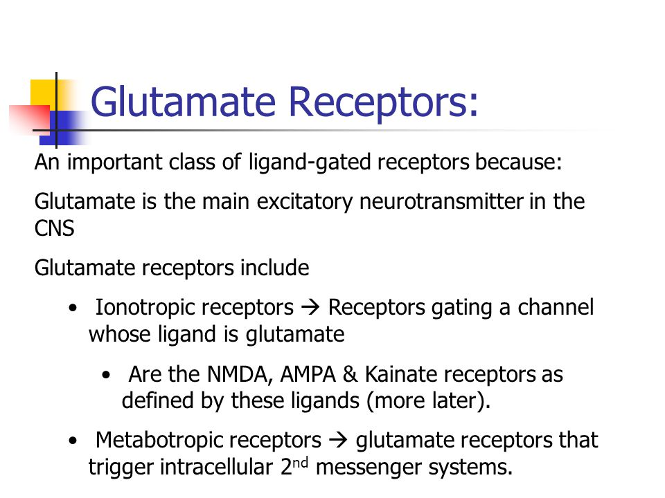 Glutamate Receptors: An important class of ligand-gated receptors because: Glutamate is the main excitatory neurotransmitter in the CNS Glutamate rece