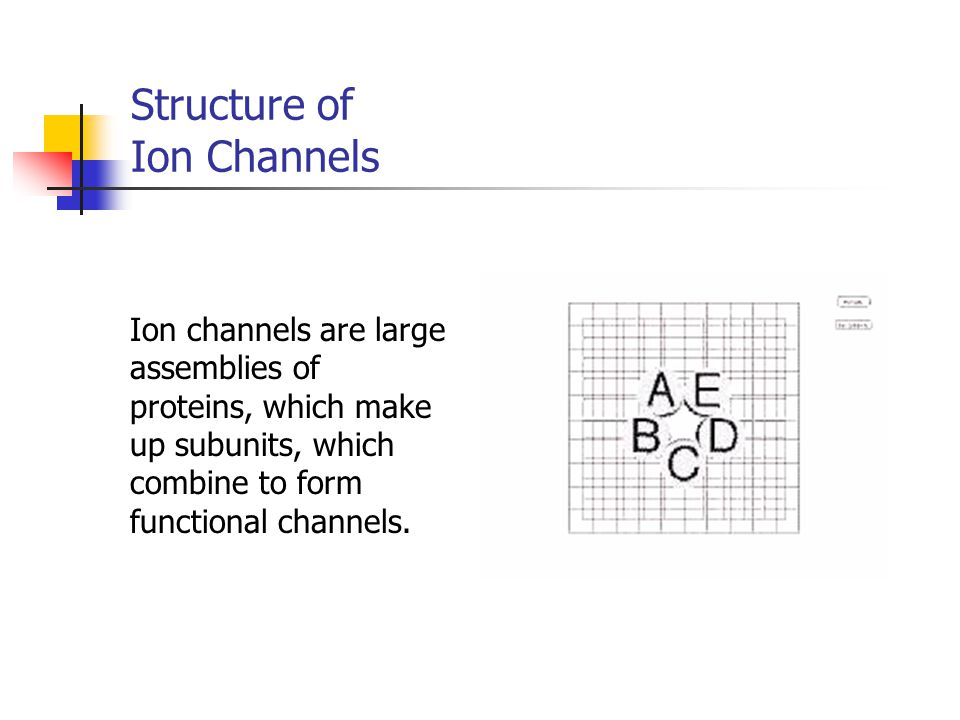 Structure of Ion Channels Ion channels are large assemblies of proteins, which make up subunits, which combine to form functional channels.