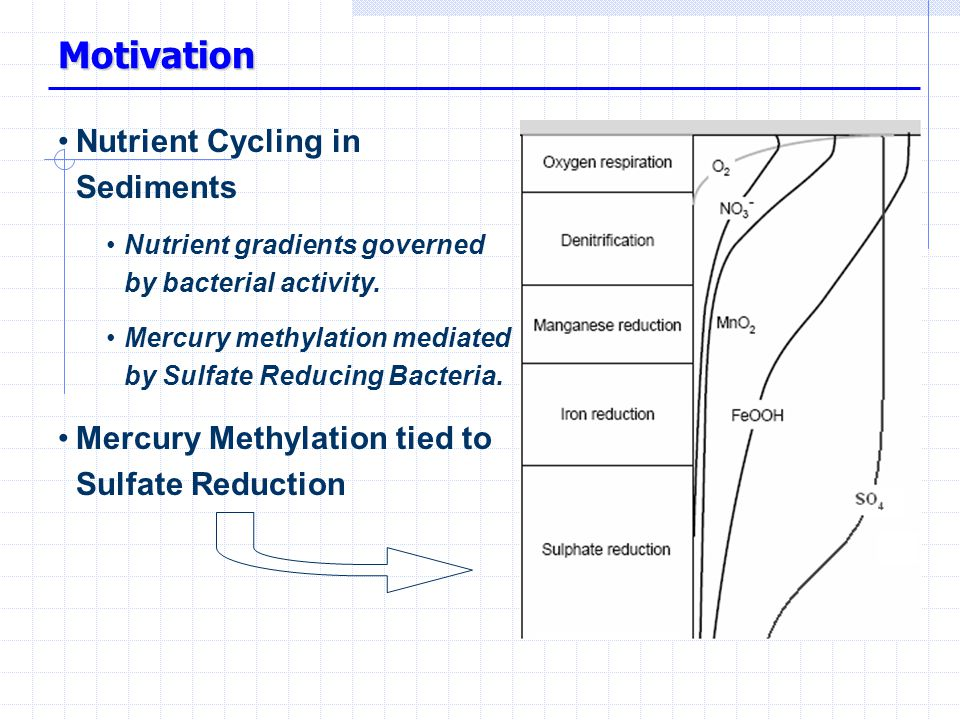 Motivation Nutrient Cycling in Sediments Nutrient gradients governed by bacterial activity.