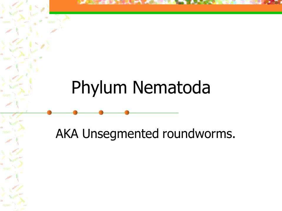Phylum Nematoda AKA Unsegmented roundworms.