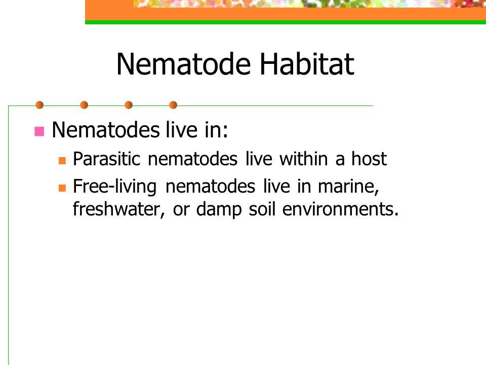 Nematode Habitat Nematodes live in: Parasitic nematodes live within a host Free-living nematodes live in marine, freshwater, or damp soil environments