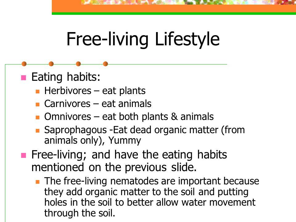 Free-living Lifestyle Eating habits: Herbivores – eat plants Carnivores – eat animals Omnivores – eat both plants & animals Saprophagous -Eat dead org