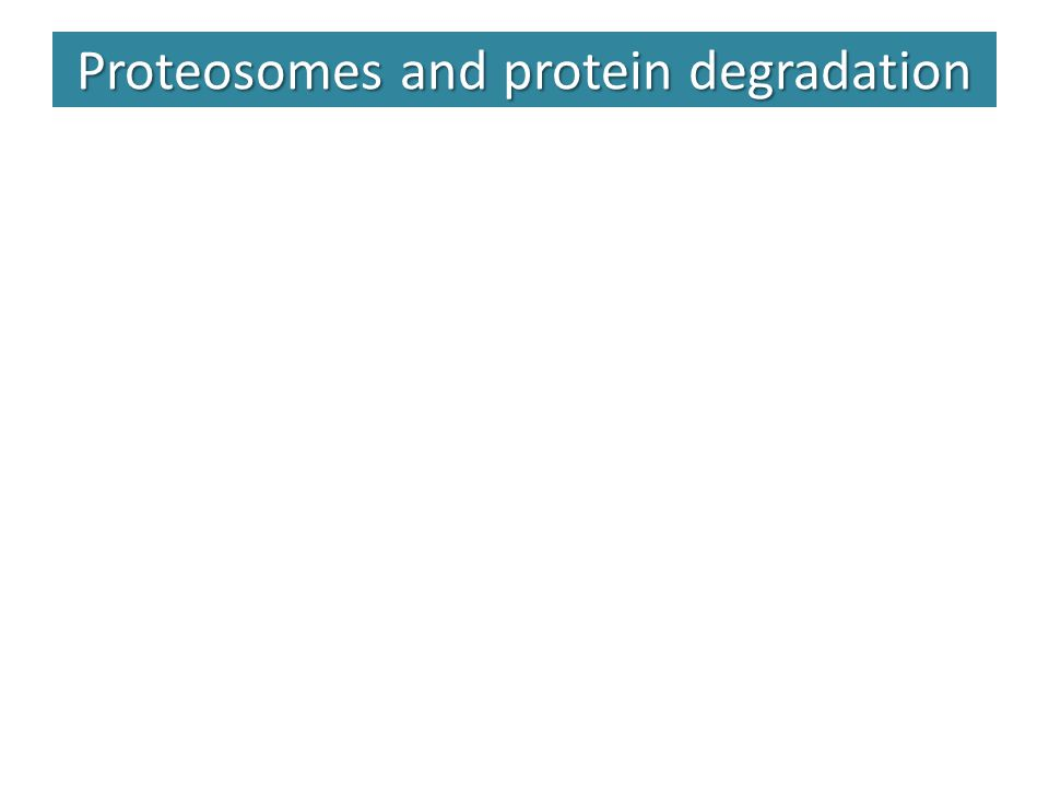 Proteosomes and protein degradation