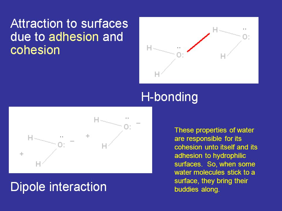 .. These properties of water are responsible for its cohesion unto itself and its adhesion to hydrophilic surfaces. So, when some water molecules stic