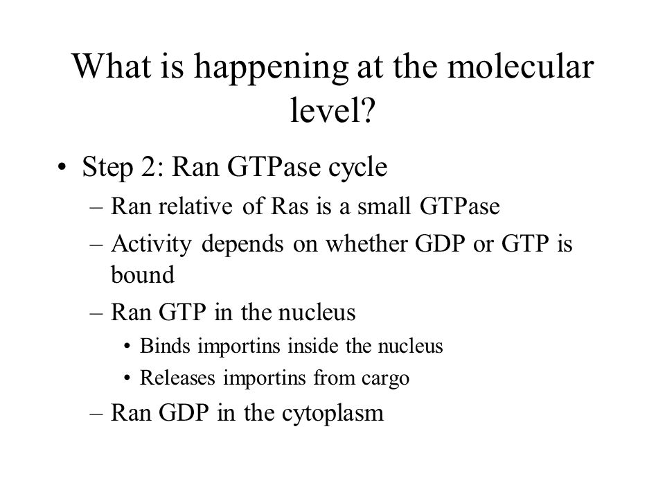 What is happening at the molecular level? Step 2: Ran GTPase cycle –Ran relative of Ras is a small GTPase –Activity depends on whether GDP or GTP is b