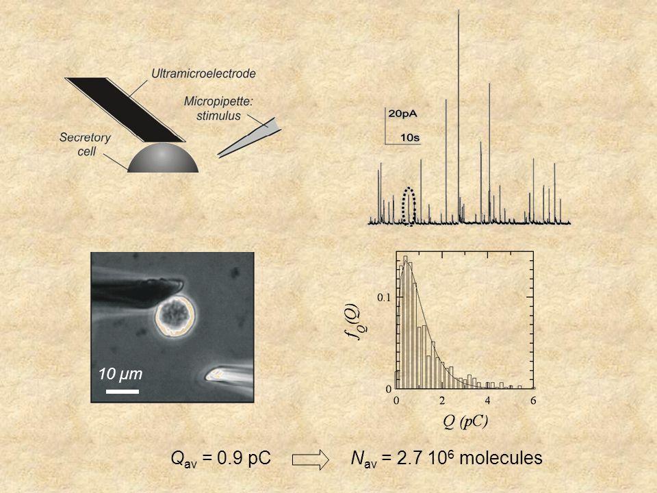 Q av = 0.9 pCN av = 2.7 10 6 molecules 10 µm