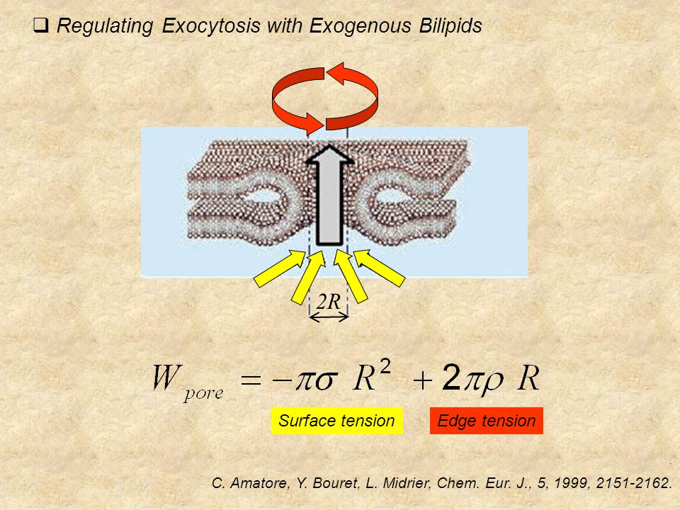  Regulating Exocytosis with Exogenous Bilipids. C.