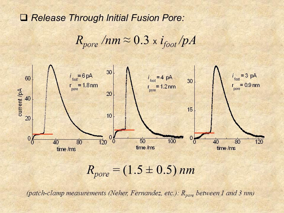  Release Through Initial Fusion Pore: R pore /nm ≈ 0.3 x i foot /pA R pore = (1.5 ± 0.5) nm (patch-clamp measurements (Neher, Fernandez, etc.): R pore between 1 and 3 nm)